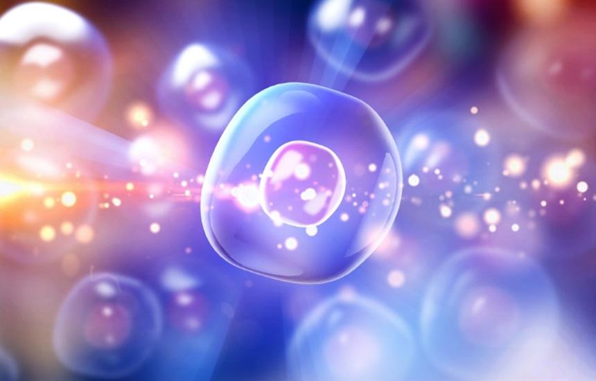 ヒト幹細胞培養上清液